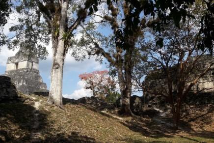 El efecto Tikal